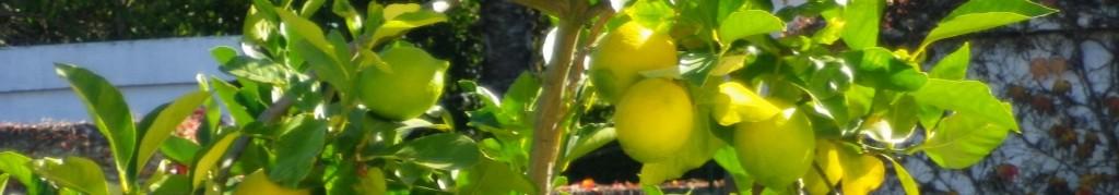 limonero-1024x179